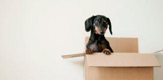 Jak nadać paczkę nie wychodząc z domu